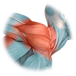 Schultergelenkprobleme behandeln in Basel